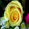 Puzzles: Yellow Roses
